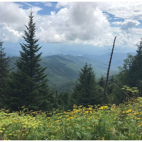 Wildflowers and mountains. At 6,643 feet, Clingmans Dome is the highest point in the Great Smoky Mountains National Park.